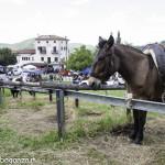 Pianazze (274) Fiera Agricola