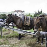 Pianazze (275) Fiera Agricola