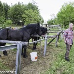 Pianazze (276) Fiera Agricola