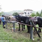 Pianazze (279) Fiera Agricola