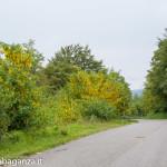 Ultra K Trail (149) Corniglio
