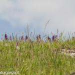 Passo Cento Croci (178) prati in fiore