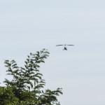 Deltamotore in volo (108) Fiera San Terenziano