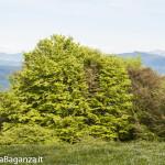 Panorama (188) Monte Pelpi