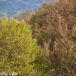Panorama (198) Monte Pelpi