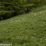 Panorama (202) Monte Pelpi