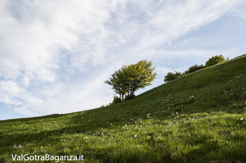 Panorama (267) Monte Pelpi