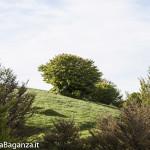 Panorama (272) Monte Pelpi