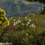 Panorama (423) Monte Pelpi