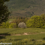 Panorama (436) Monte Pelpi