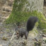 scoiattolo di Roberto Pavio (101)