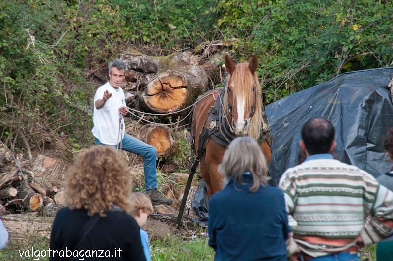 Dimostrazione di lavoro del bosco con i cavalli