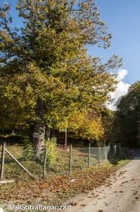 Foliage (105) castagneti