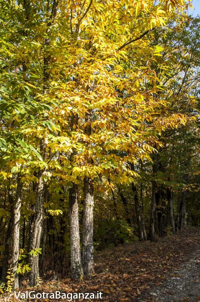 Foliage (122) castagneti