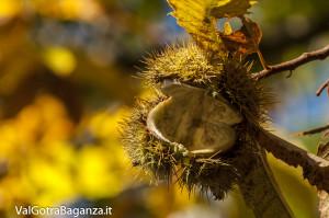 Foliage (125) castagneti