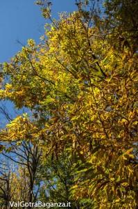 Foliage (126) castagneti