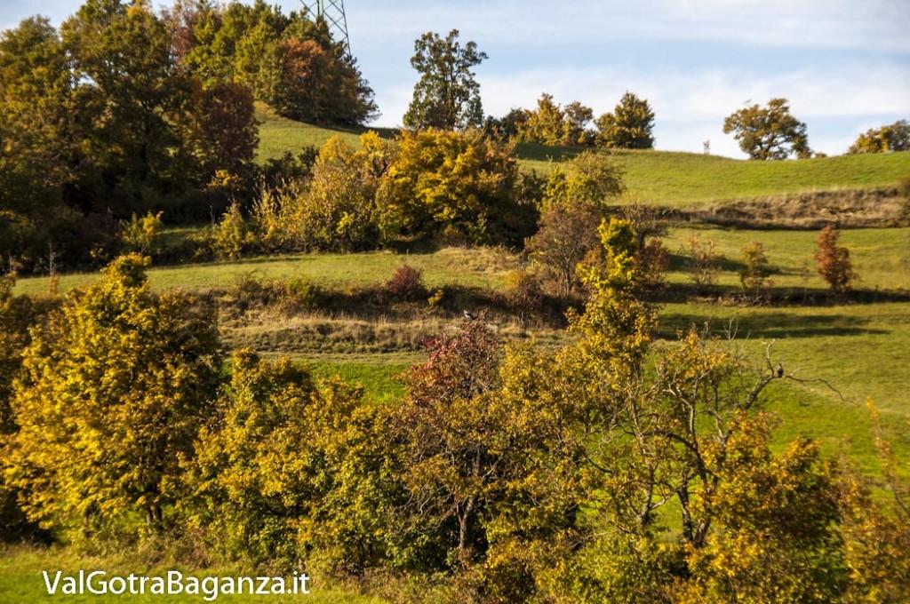 Foliage Albareto (129)