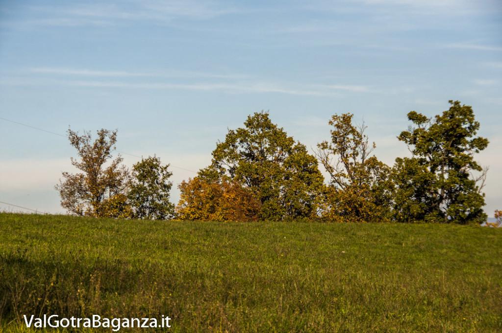 Foliage Albareto (131)