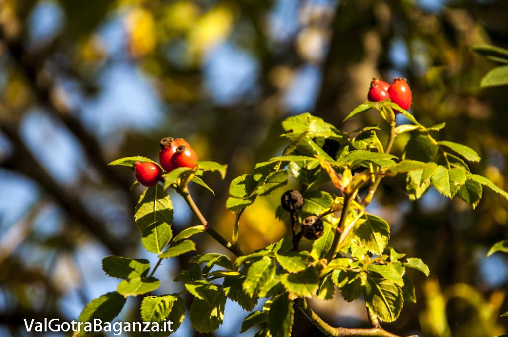 Foliage Albareto (162)