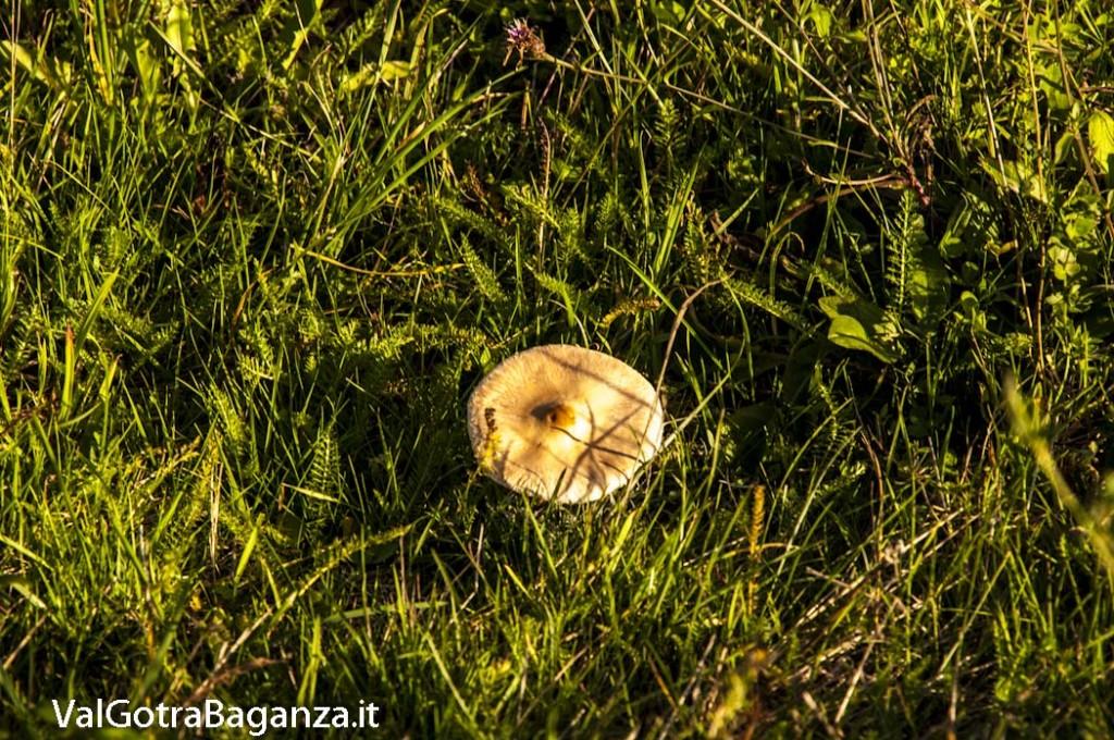 Foliage Albareto (170)