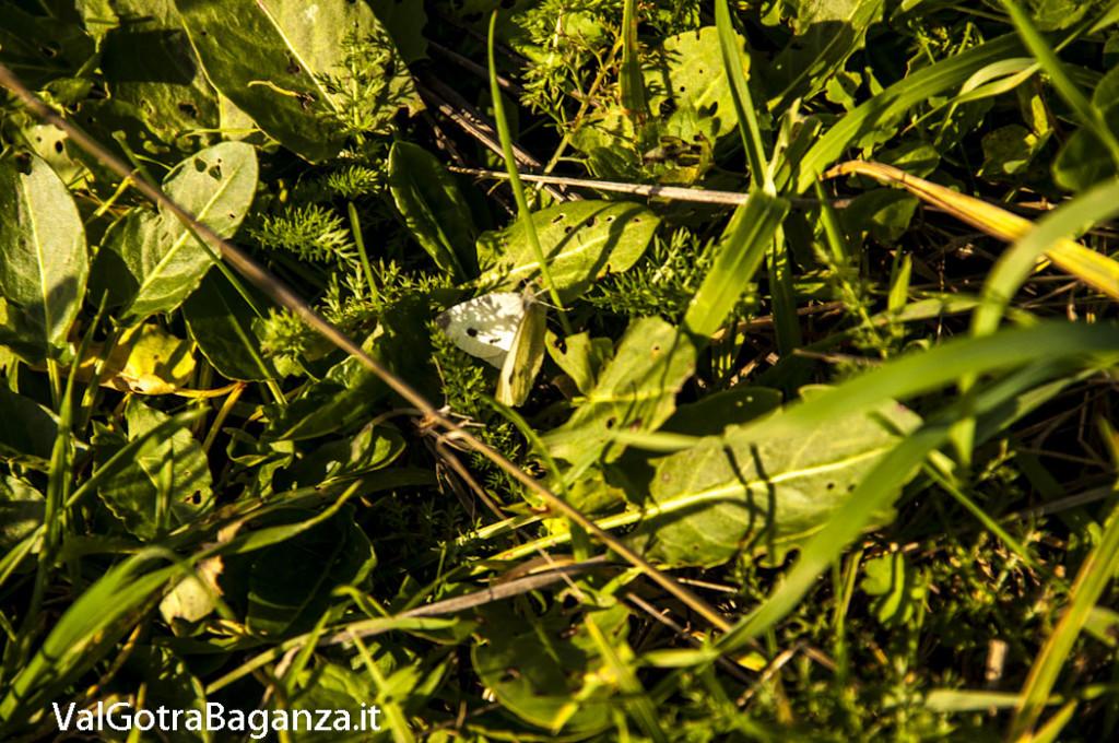 Foliage Albareto (182)