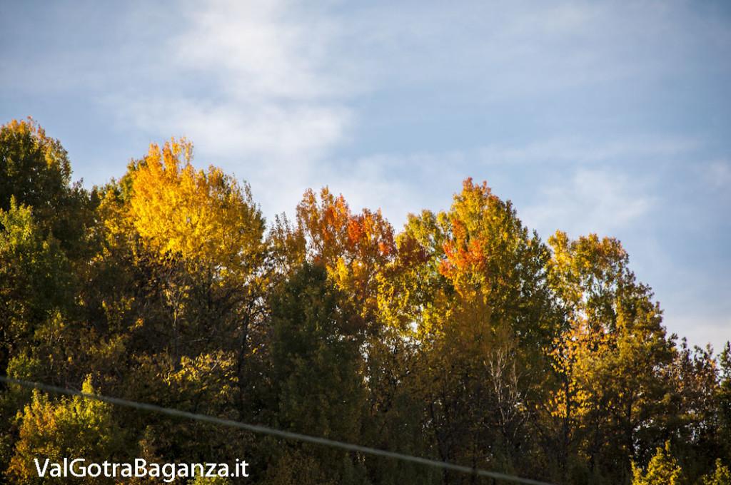 Foliage Albareto (190)