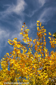 Foliage Albareto (217)