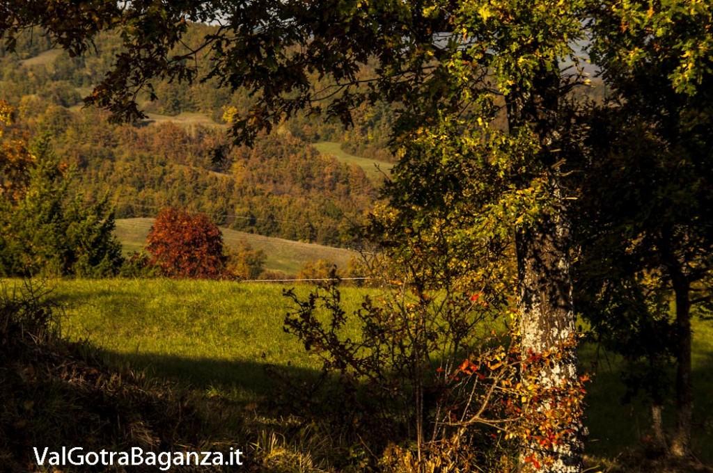 Foliage Albareto (224)