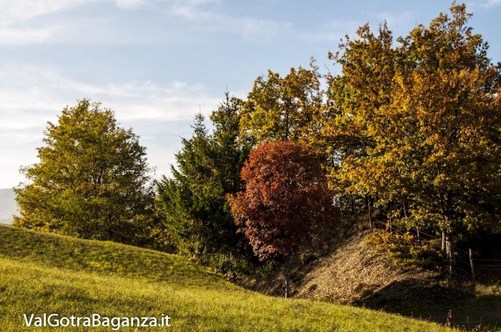Foliage Albareto (235)