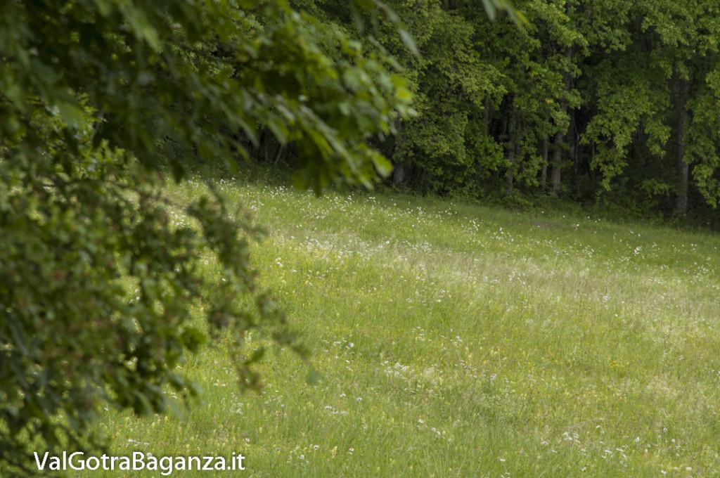 Riserva Naturale Regionale Ghirardi (126) Oasi WWF Parma