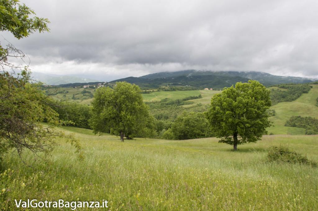 Riserva Naturale Regionale Ghirardi (135) Oasi WWF Parma