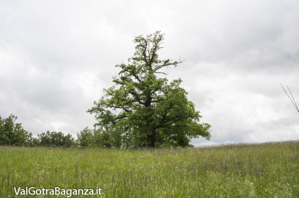 Riserva Naturale Regionale Ghirardi (163) Oasi WWF Parma