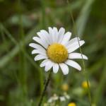 Riserva Naturale Regionale Ghirardi (171) Oasi WWF Parma