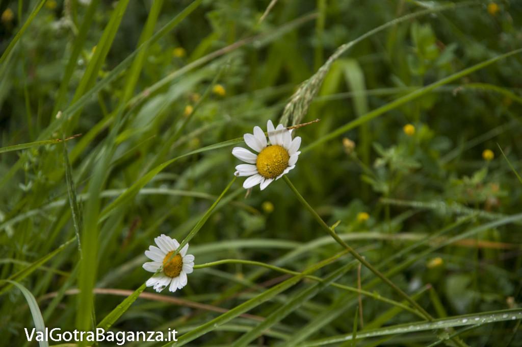 Riserva Naturale Regionale Ghirardi (175) Oasi WWF Parma