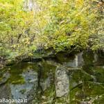 Foliage e Sculture Volti (107) Borgotaro