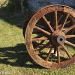 ruote  carro agricolo (103)