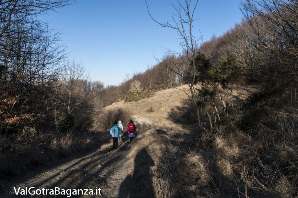 Passo Cappelletta (155) Folta