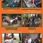 fiera-agricola-valceno-2017-programma-106