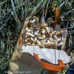 fungho-prugnolo-spinarolo-100-val-taro