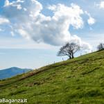 monte-pelpi-n225-taro-ceno