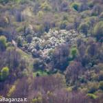 monte-pelpi-n273-taro-ceno