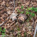 boschi-127-funghi-valtaro