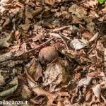 boschi-143-funghi-valtaro