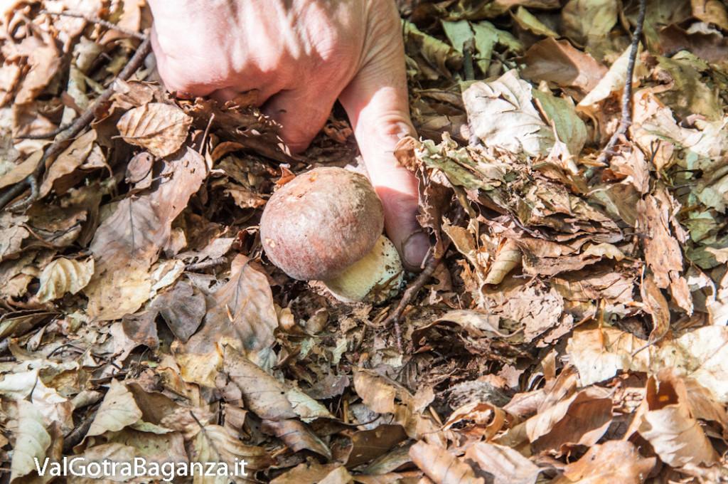boschi-149-funghi-valtaro