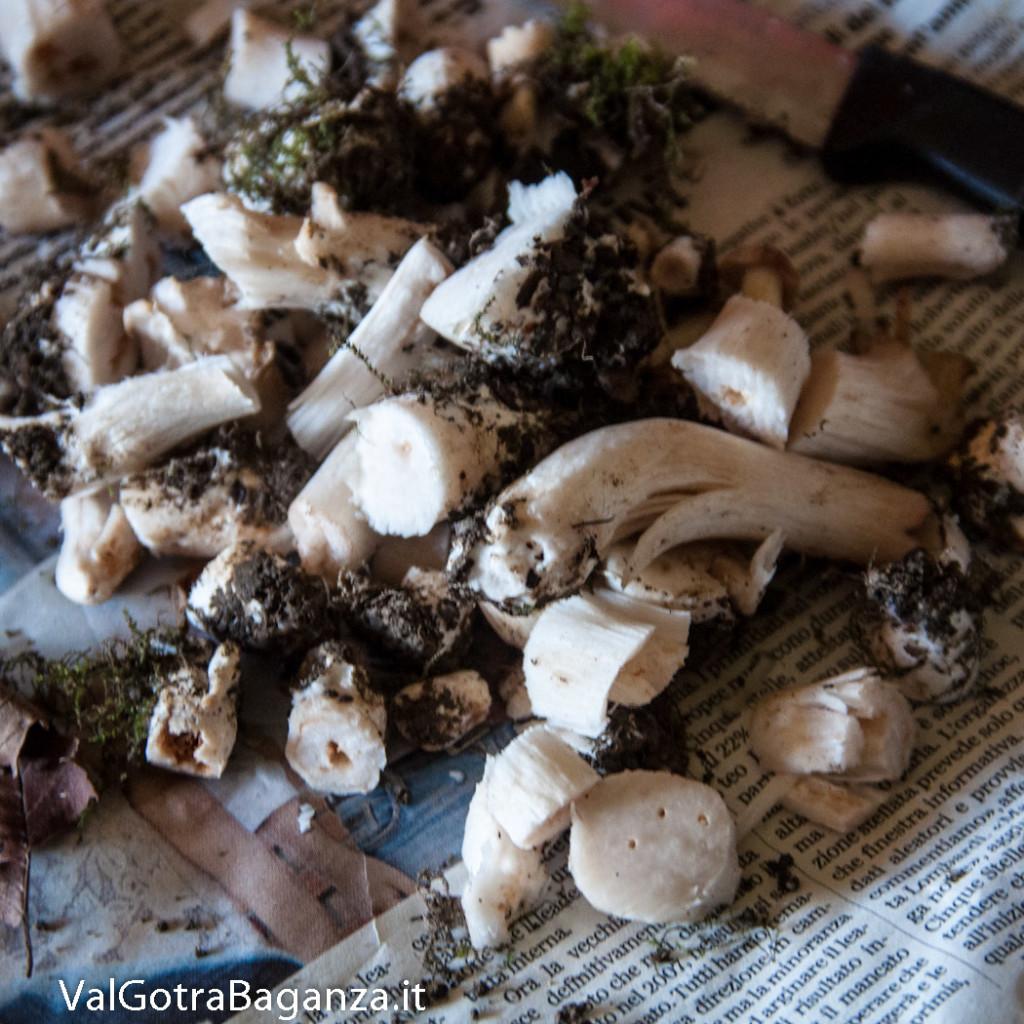 carbonara-di-funghi-primaverili-102