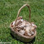 funghi-primaverili-139