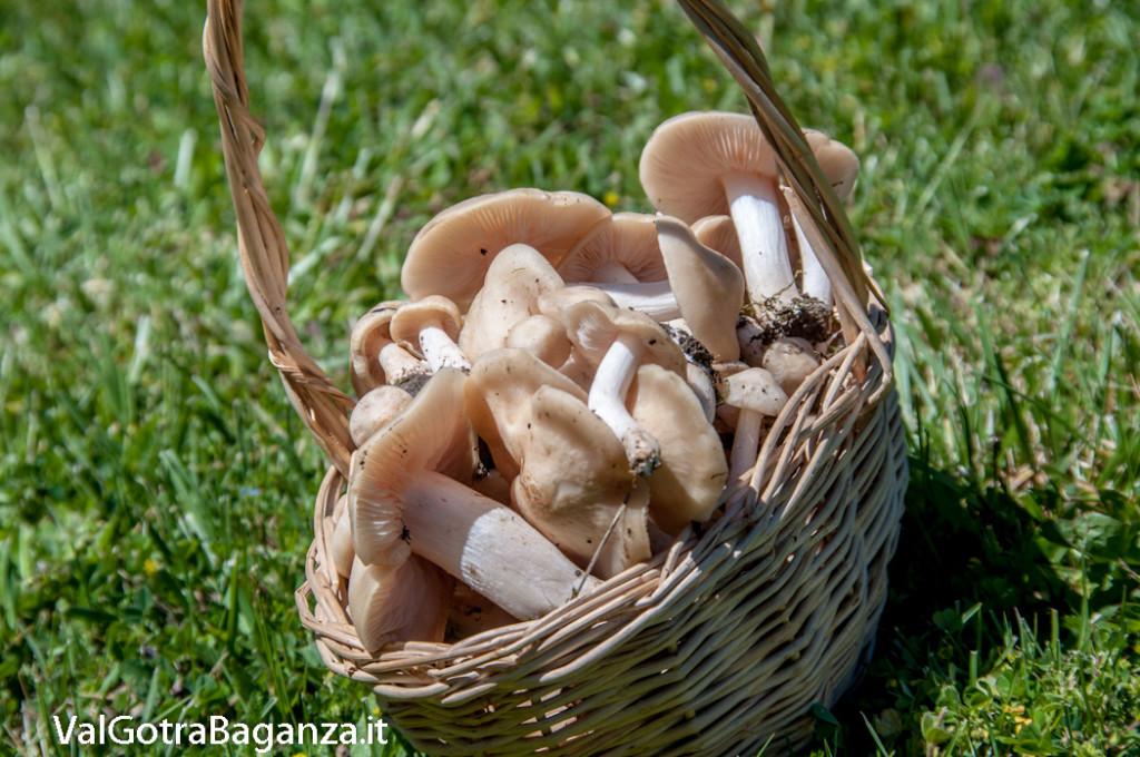funghi-primaverili-143