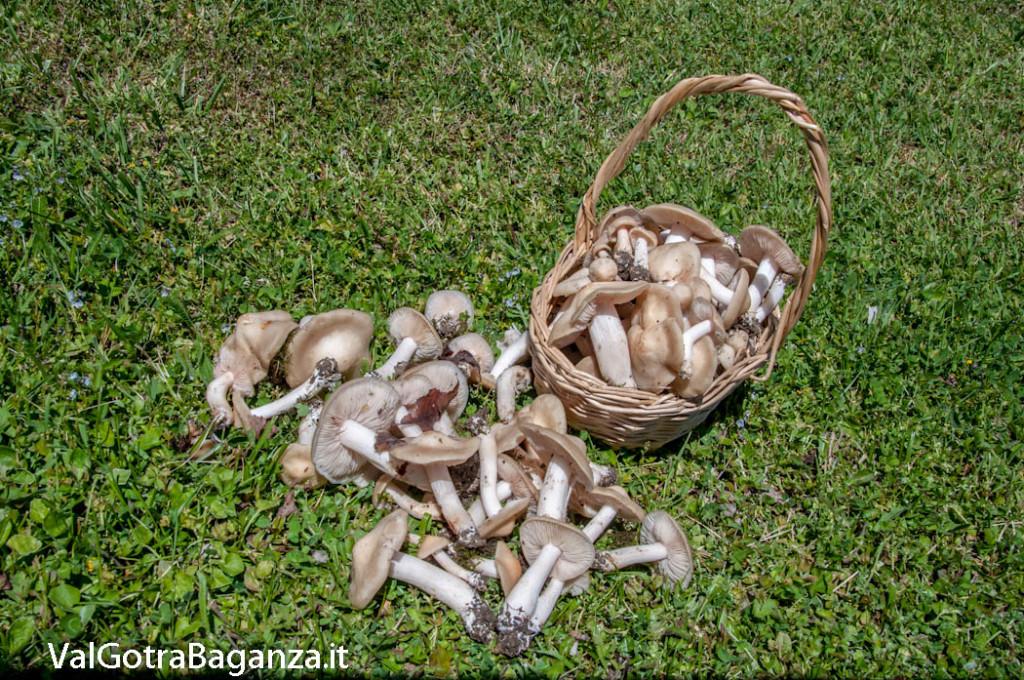 funghi-primaverili-153
