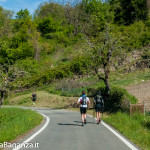 the-abbots-way-114-trail