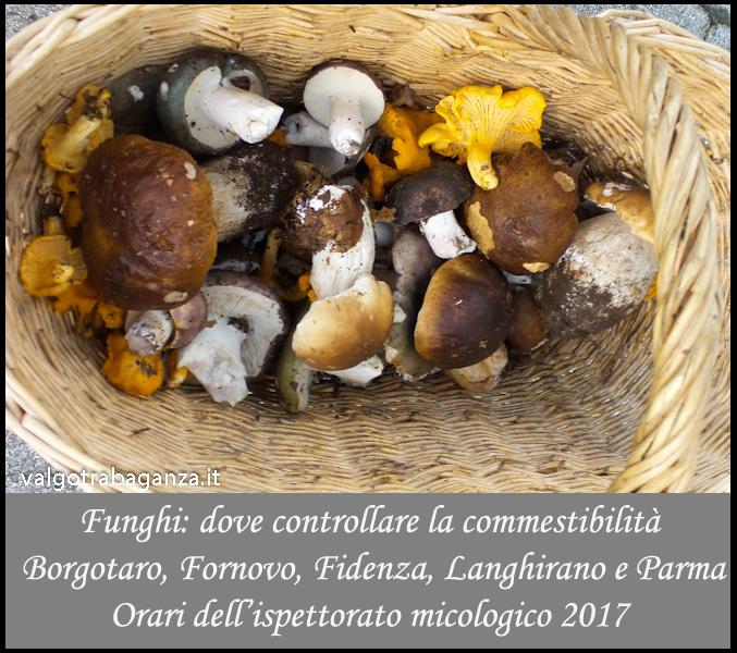 funghi-orari-dellispettorato-micologico
